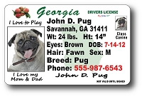 Georgia Drivers License
