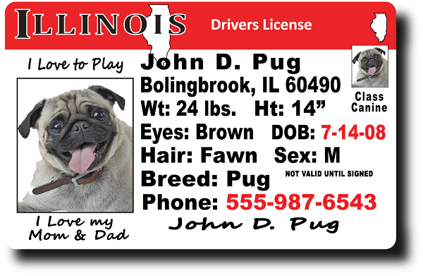 Illinois Drivers License