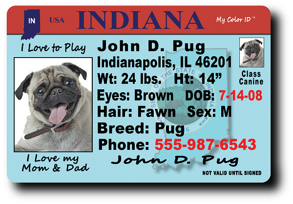 Indiana Drivers License