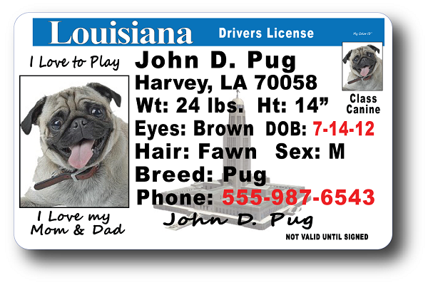 Louisiana Drivers Drivers License Drivers License Louisiana License Louisiana Louisiana