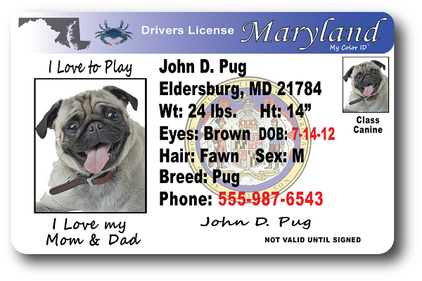 Drivers Maryland Maryland License Drivers