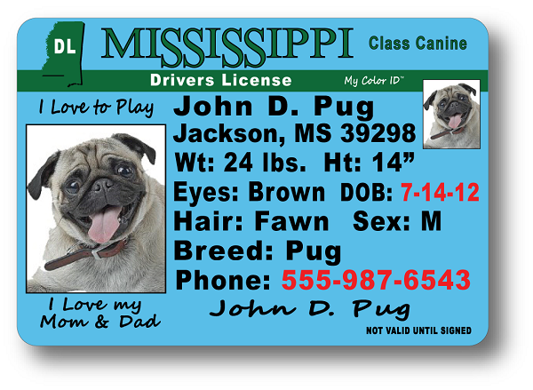 mississippi drivers license jackson ms