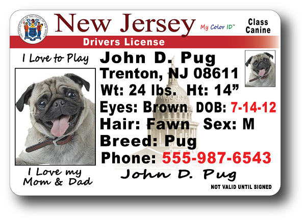 New Jersey Drivers License