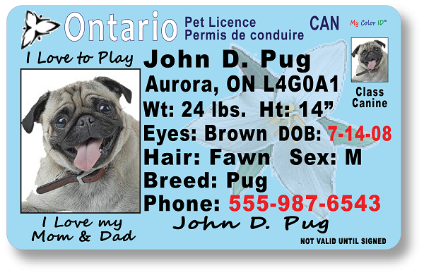 Ontario Drivers License