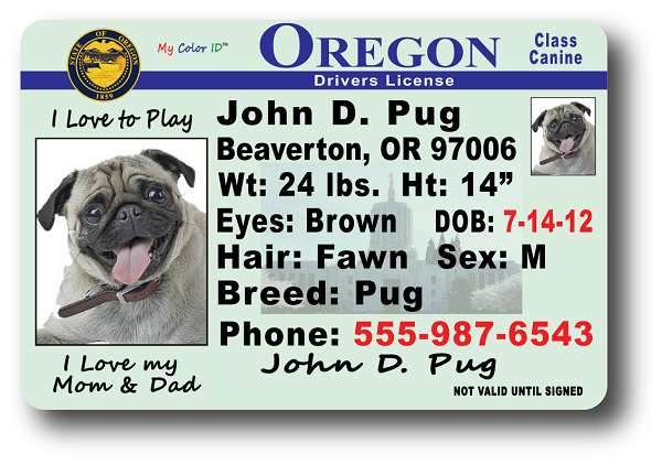 License Drivers Oregon Drivers Drivers Oregon License Oregon