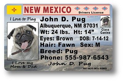 New Mexico Drivers License
