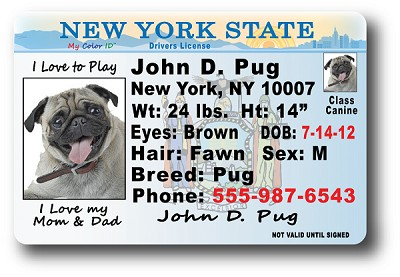 New York Drivers License