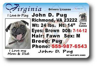 Virginia Drivers License