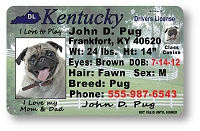 Kentucky Drivers License
