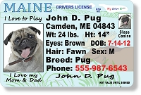 Maine Drivers License