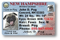 New Hampshire Drivers License