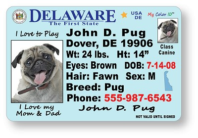High Definition (HD) PVC Durable ID Cards (30 mm Thickness). Same durable material as a real Drivers License.